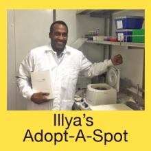 Illya's Adopt-A-Spot
